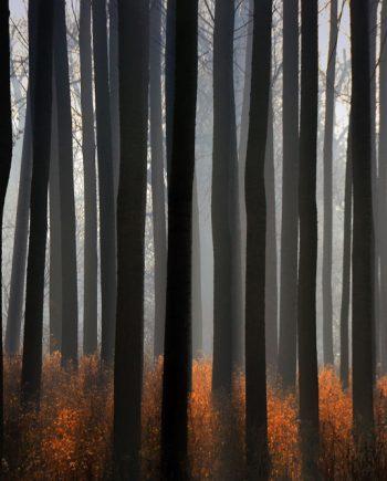 Fotografija Čarobna šuma 529-1