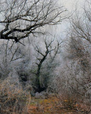 Fotografija Zimska bajka 532-1